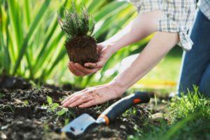 Лунный посевной календарь садовода и огородника может подсказать, как правильно ухаживать за растениями