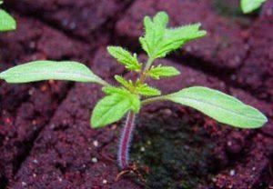Календарь садовода и огородника на февраль 2019 может рассказать, когда сажать рассаду