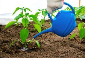 Как поливать рассаду перекисью водорода, какие пропорции?