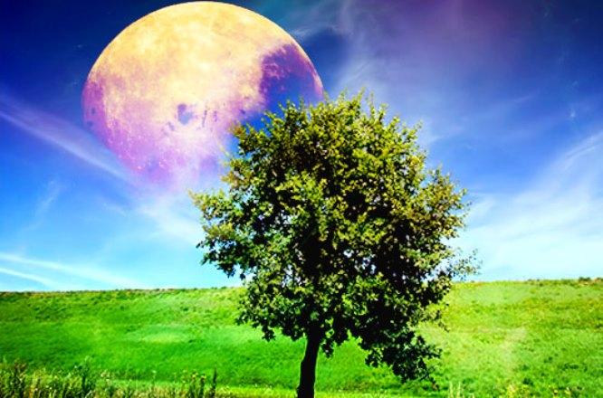 Лунный посевной календарь на апрель 2019 года для садовода, огородника и цветовода