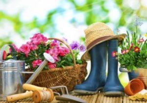 Посевной календарь для огородника на апрель 2019 года: благоприятные дни по лунному календарю