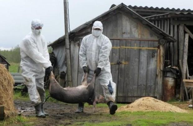 В российском регионе ввели режим ЧС из-за масштабной эпидемии