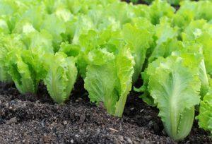 Что делать и что посадить в огороде в сентябре