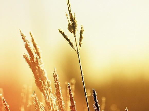 ООН обеспокоила аномальная жара в Якутии