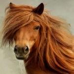 Лошади могут подарить новое лекарство против COVID-19?