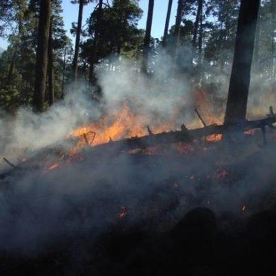 В Воронежской области лесные пожары уничтожают постройки