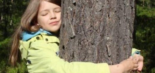 В Финляндии проходит второй по счету Чемпионат мира по обниманию деревьев