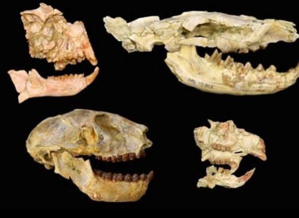 Обнаружены следы ранее неизвестного массового вымирания